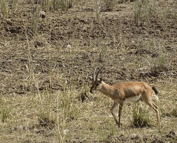 How is Palpur-Kuno Wildlife Sanctuary? - Quora