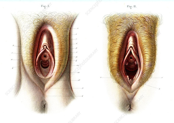 Amazing facts you do not know about your vagina