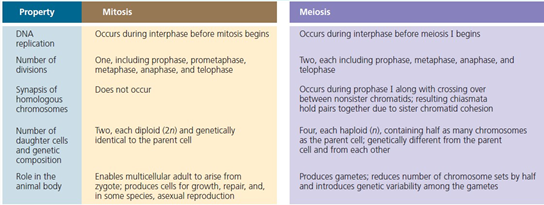 A key difference between mitosis and meiosis is asexual reproduction
