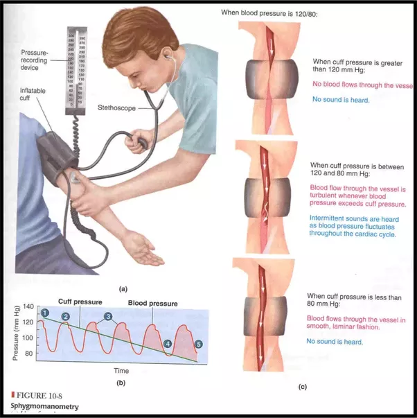What Are The Different Types Of Sphygmomanometers Blood Pressure