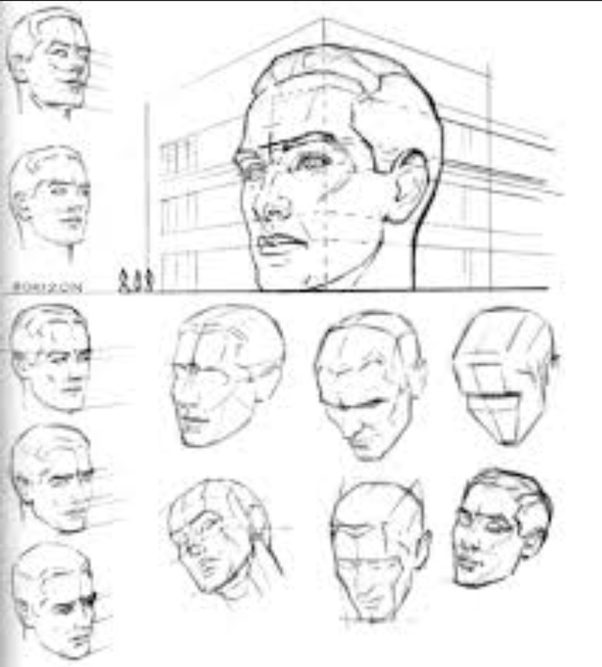 How To Draw Face Basic Proportions