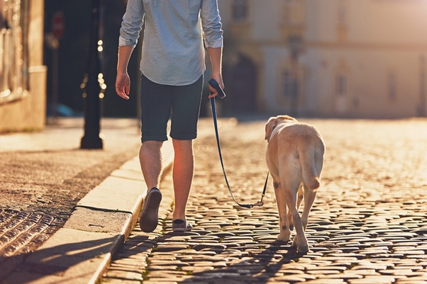 Can walking a dog help you lose weight