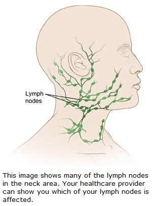Where are lymph nodes in neck? - Quora