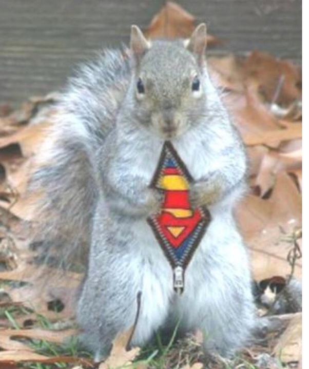 """What song would be improved by changing """"girl"""" to """"squirrel"""