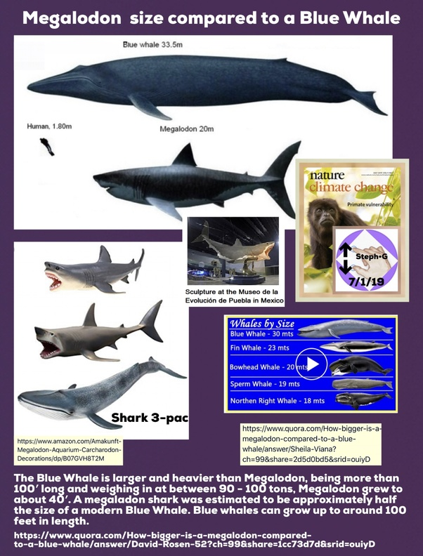 How Bigger Is A Megalodon Compared To A Blue Whale Quora
