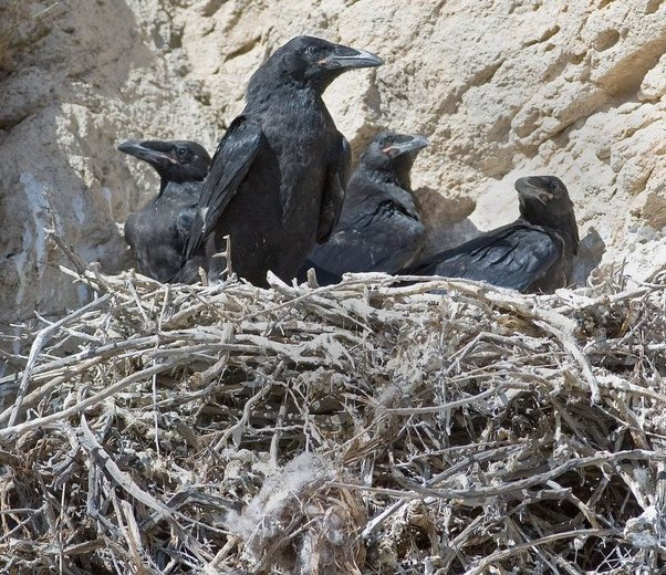 what do birds make nests from