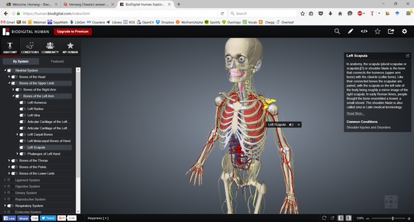 What Are The Best Websites To Learn Human Anatomy Quora
