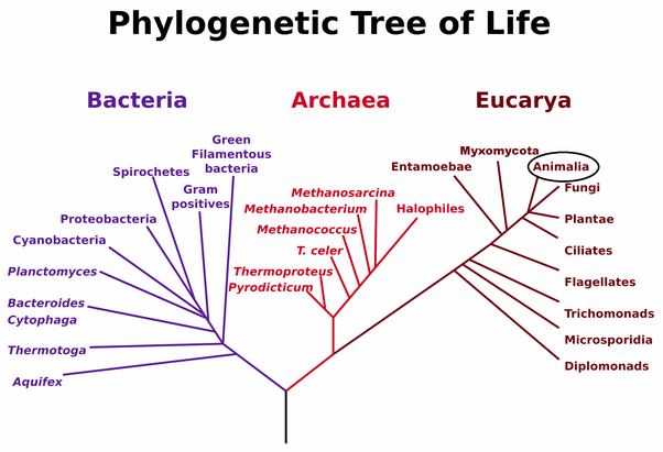 Why Are Phylogenetic Diagrams Used By Cladists What Purpose Do They