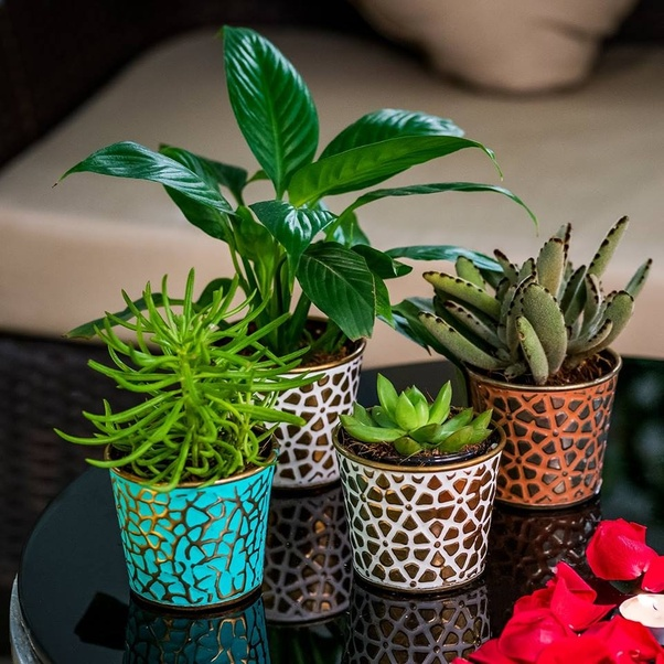 Where Can I Buy Plants In Chennai Quora