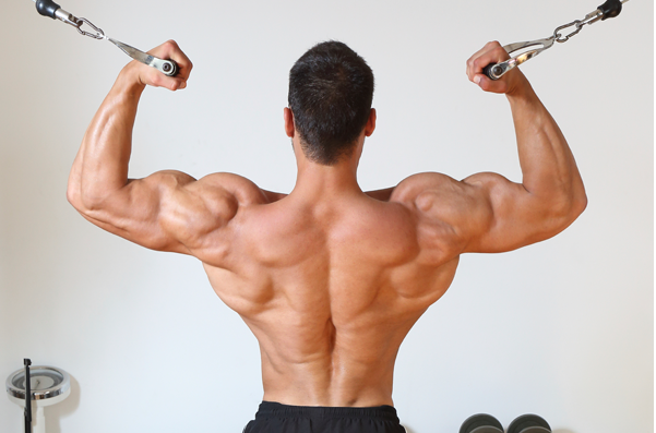 What\'s the best lower trapezius exercise? - Quora