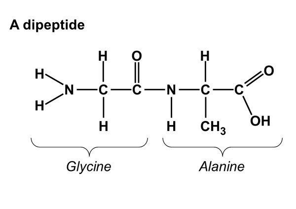 how do we name dipeptides made up of 2 alpha amino acids