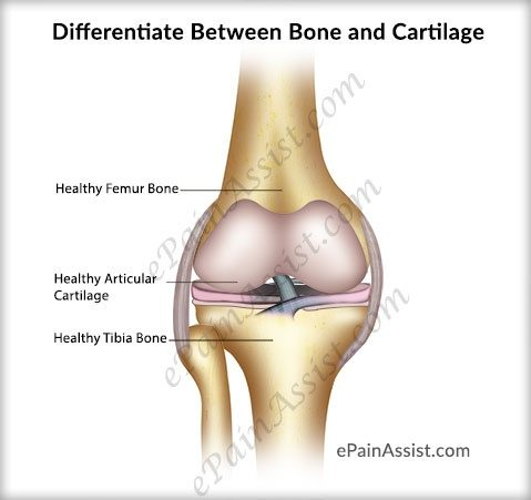 What is the difference between bones and cartilage quora what is the difference between bones and cartilage ccuart Image collections