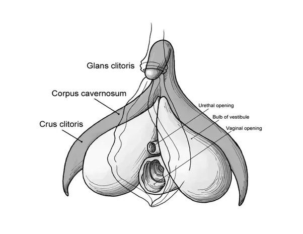 Pictures with clitoris vagina
