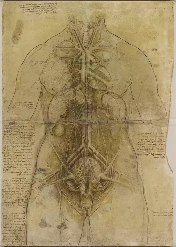 How had Leonardo da Vinci created visionary anatomical drawings long ...