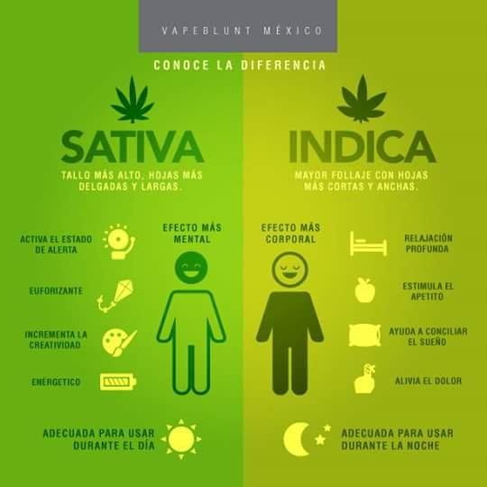Cuál Es La Diferencia Entre Cannabis Indica Y Sativa Quora