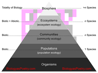 Describe the five levels of ecological study - answers.com