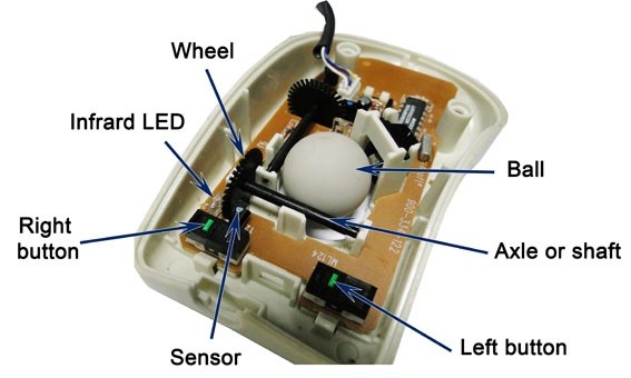 What Are The Basic Parts Of A Computer Mouse