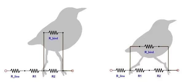 Why don\'t birds get electrocuted sitting on power lines? - Quora