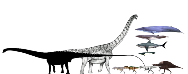 What was the largest and longest Sauropod dinosaur? - Quora