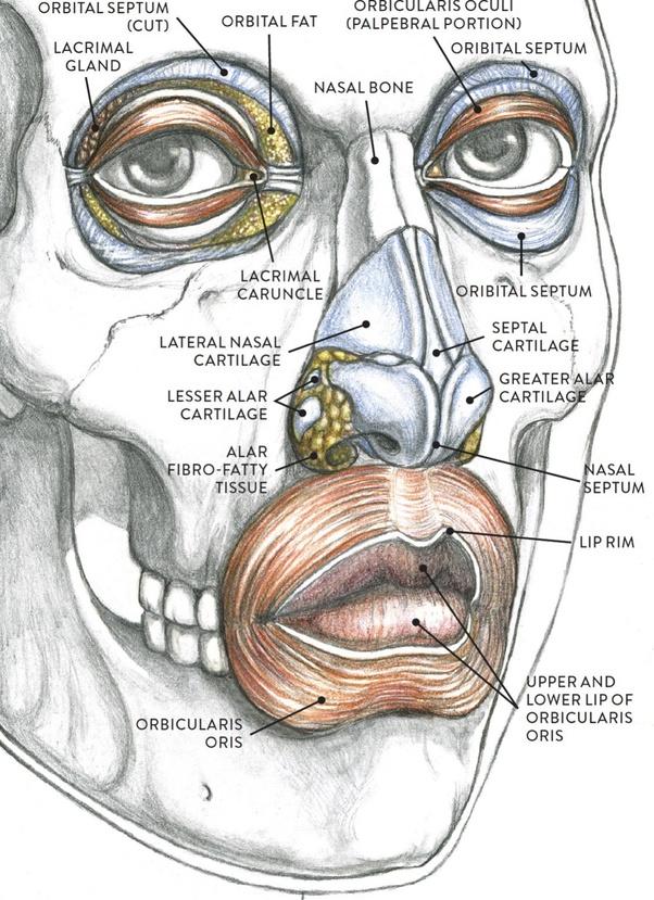 fibro fatty tissues in nose