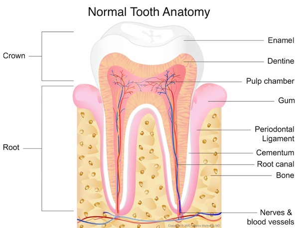 Why is the bone exposed after tooth extraction? - Quora