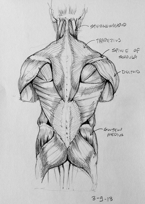 What is the best way to remember the names of human muscles and ...