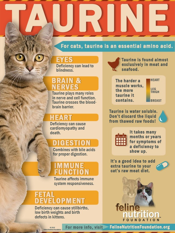 human food Persian Kittens/Cats can eat