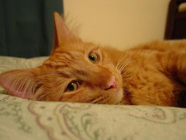 Do cats go to Heaven? - Quora