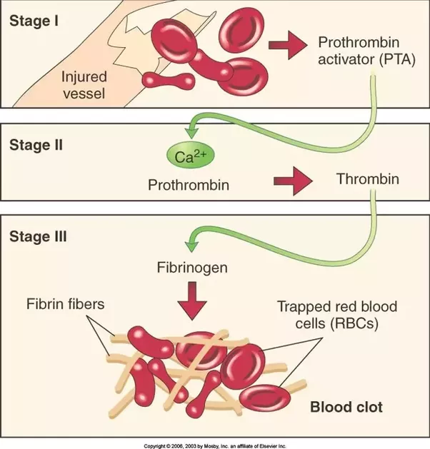 how to stop blood clots on plane