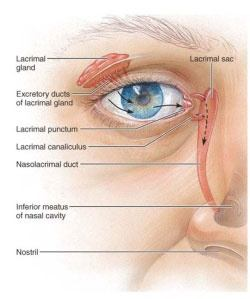 Where do all the wastes that enter our eyes go, once they ... Inferior Meatus Drainage