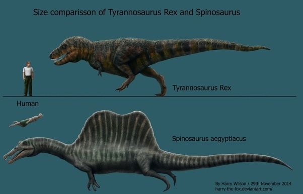 Who would win in a fight: Spinosaurus or T. rex? - QuoraGiganotosaurus Vs Spinosaurus Who Would Win