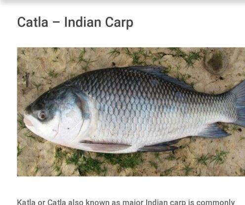 Indian all fish photos