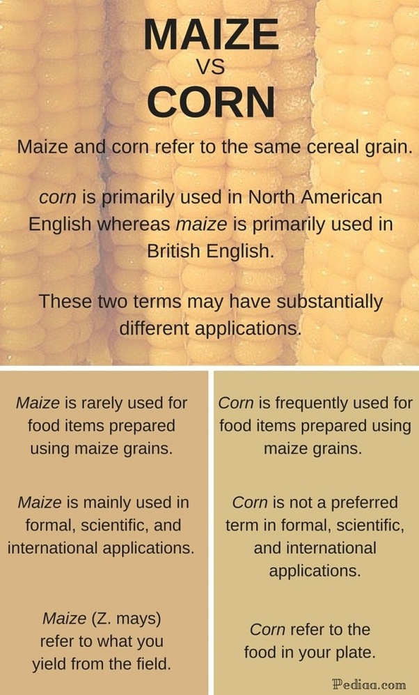What is the difference between corn and maize? - Quora