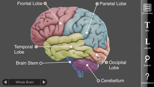What Is The Best App Or Website For Learning Neuroscience Quora