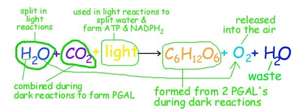 what is the overall reaction (formula) for photosynthesis