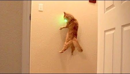 Is It Bad For My Catu0027s Self Esteem If He Never Catches The Laser Pointer  Light?