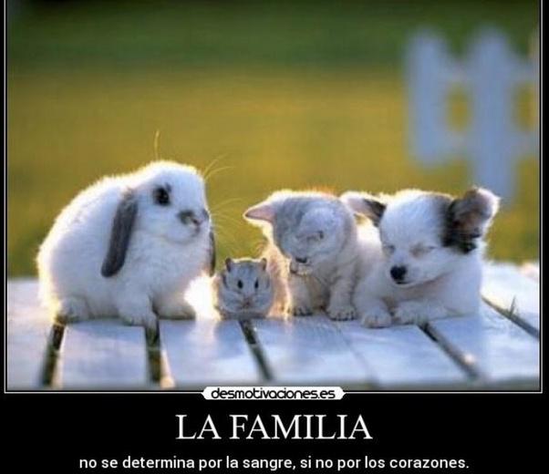 que tan importante es la familia