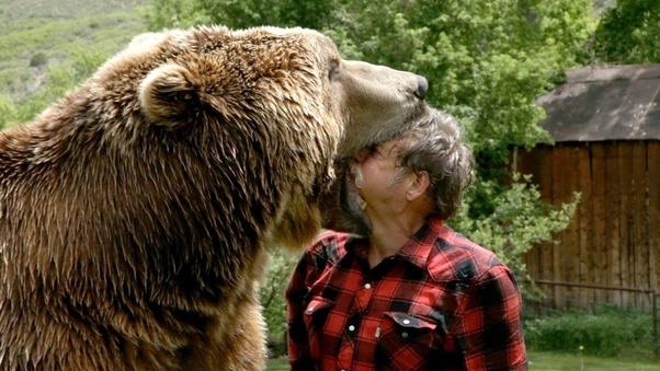how dangerous are brown bears quora
