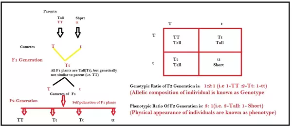 A Genotype Example