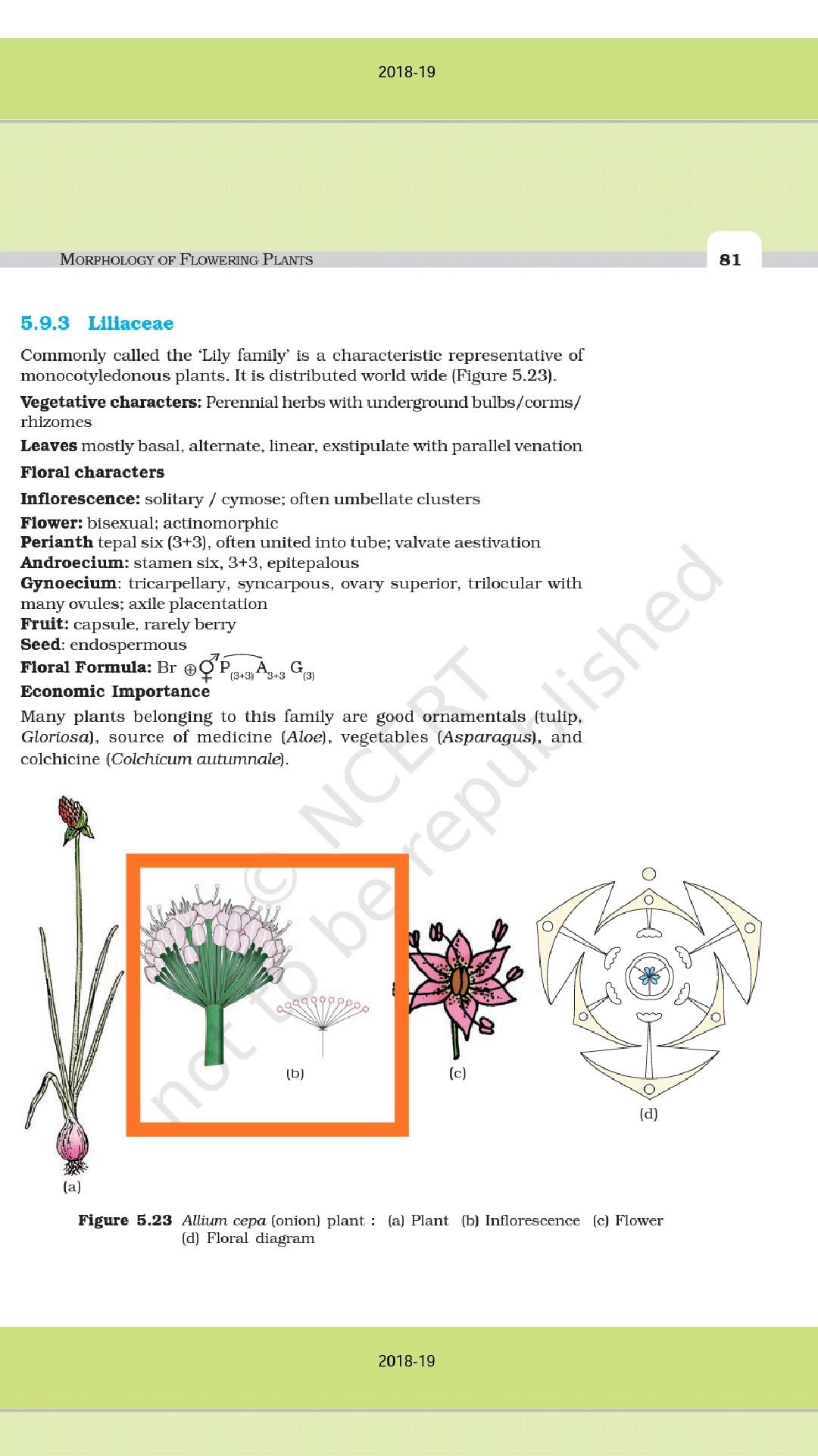 💌 Ncert biology pdf free download | NCERT Solutions for