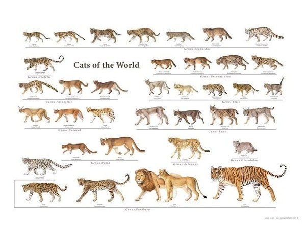 Cats Like Us Size Chart