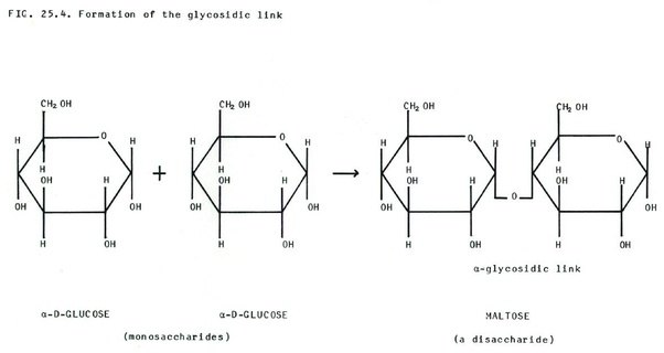 how do maltose and glucose differ