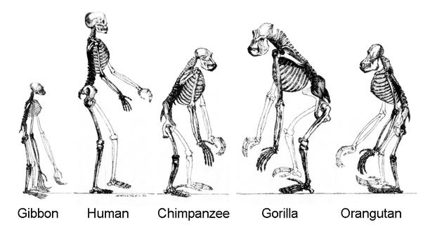 Image result for primates