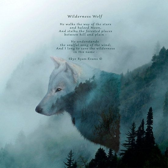 What Are Some Quotes And Poems About Wolves Quora