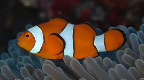 What types of fish are in finding nemo quora for Finding nemo fish names