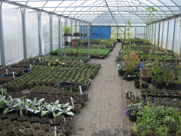 Why are seeds first grown in nurseries, then transplanted to fields
