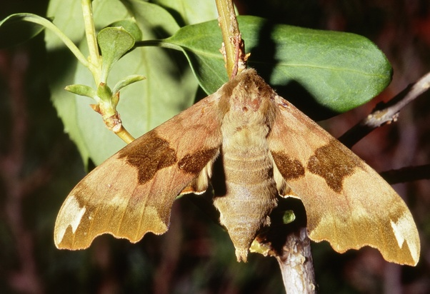 What are some ways to catch a moth in your house? - Quora