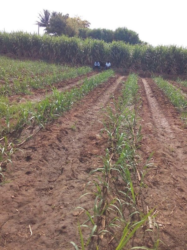What is plantation agriculture? - Quora