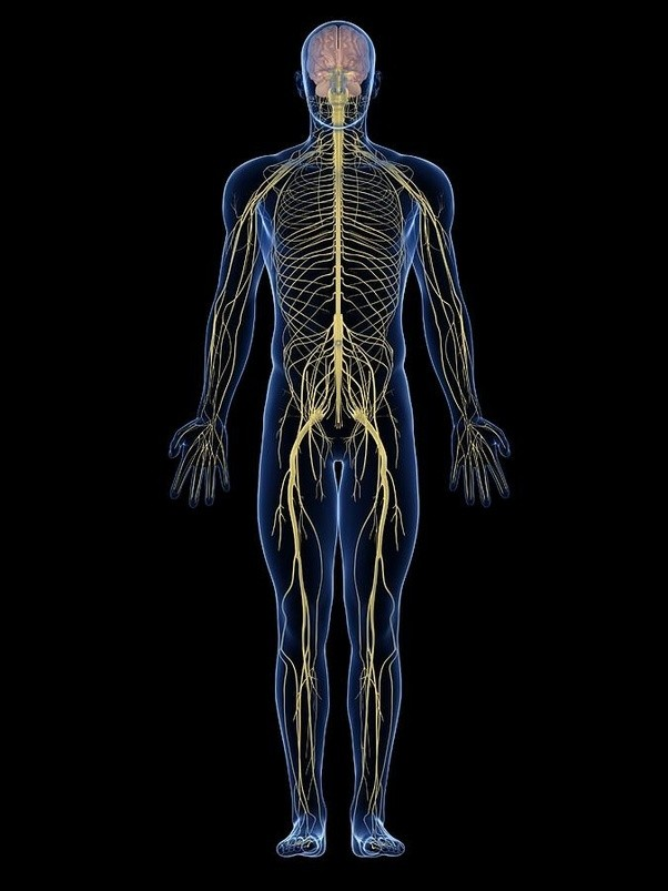Can a human body get electrically charged? - Quora
