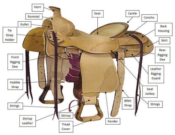 Why do horseback riders use saddles? - Quora